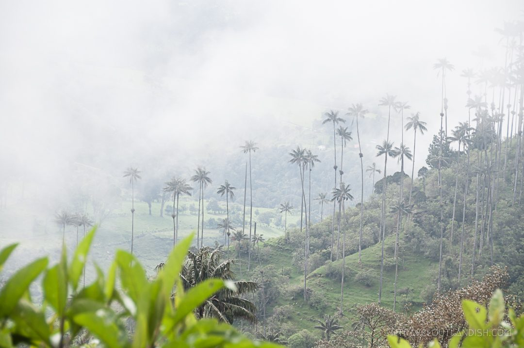 Valle de Cocora Hike - The Valley