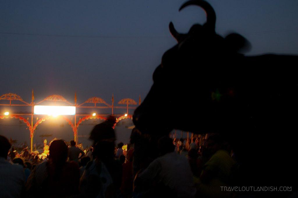 Bull at night in Varanasi