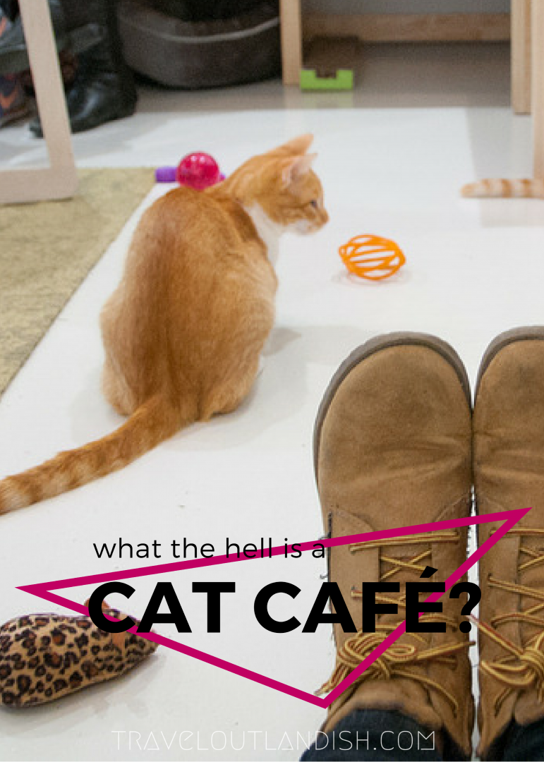 Popularized in Asia, cat cafés have come to the US at last. Inside KitTea Cat Café in San Francisco - what to expect and other important details.