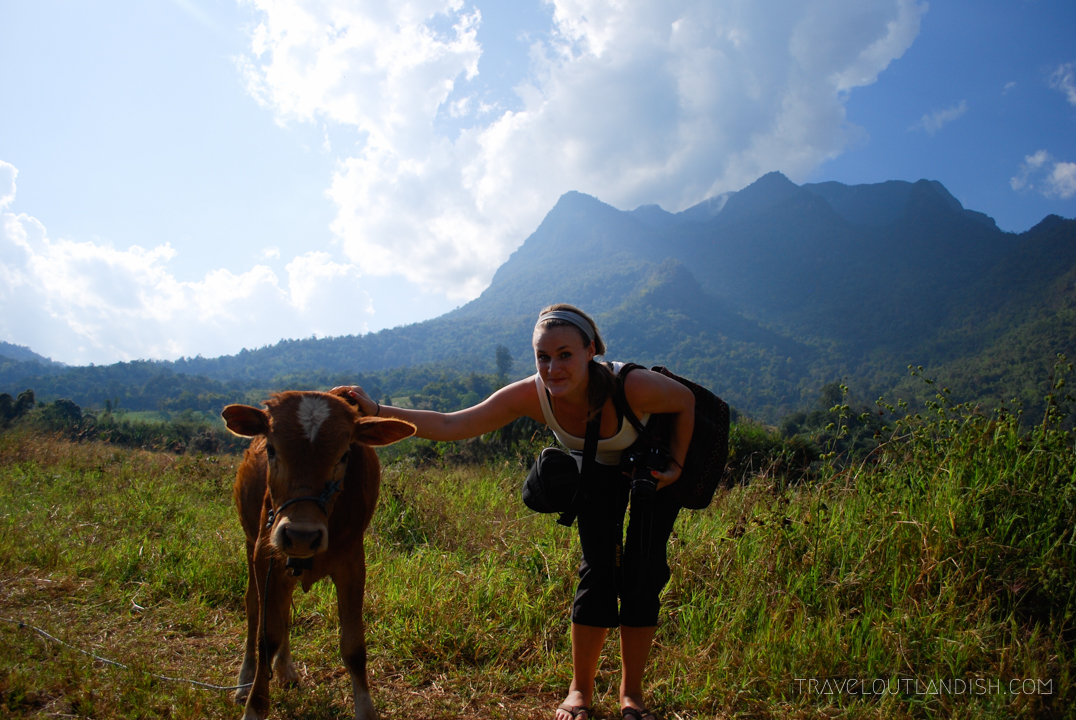 Fun Things to do in Chiang Mai - Taylor with a cow on the way to Chiang Dao