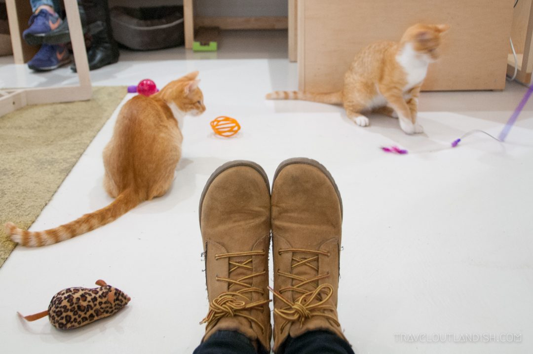 Unique Things to do in San Francisco: KitTea Cat Café in SF