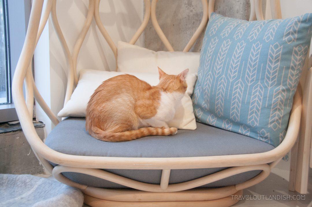Cat in chair at KitTea