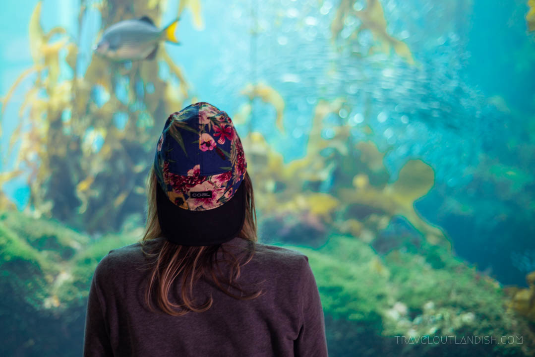 The 8 Best Travel Experiences In Monterey Usa Travel