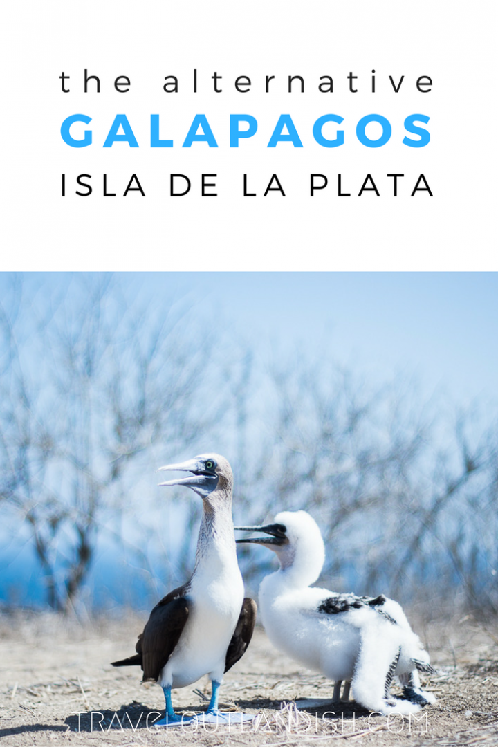 Looking for a Galapagos alternative that won't blow your budget? Exploring Isla de la Plata for just $50!