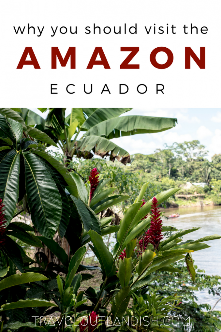 The Ecuador Amazon will enliven your purest sense of adventure. What to expect from Amazon tours in Ecuador (featuring Samona Lodge) + a travel video!