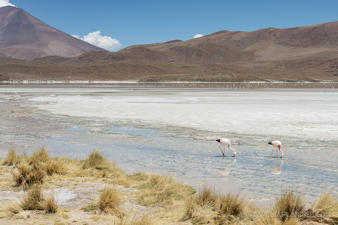 Flamingos at Eduardo Abaroa Andean Fauna National Reserve