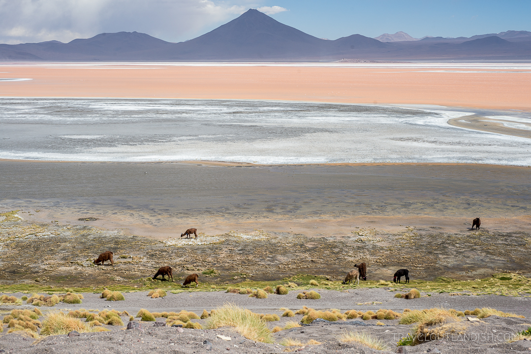 Salar de Uyuni Tours - Laguna Colorada