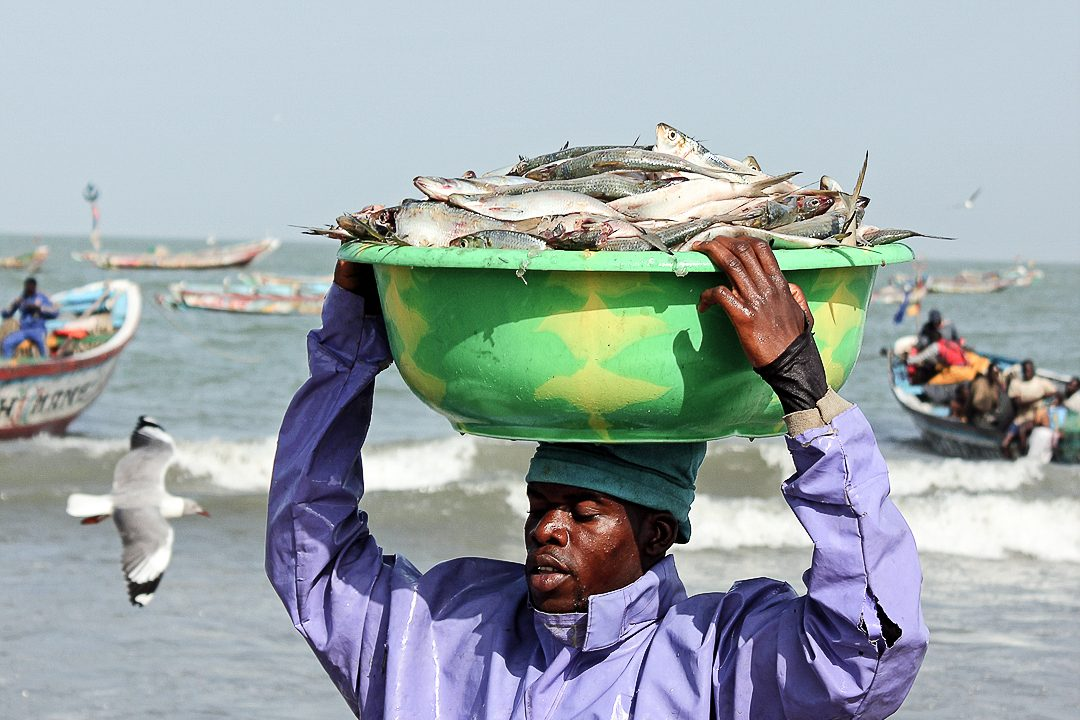 Tanji Fish Market - Man Carrying Fish