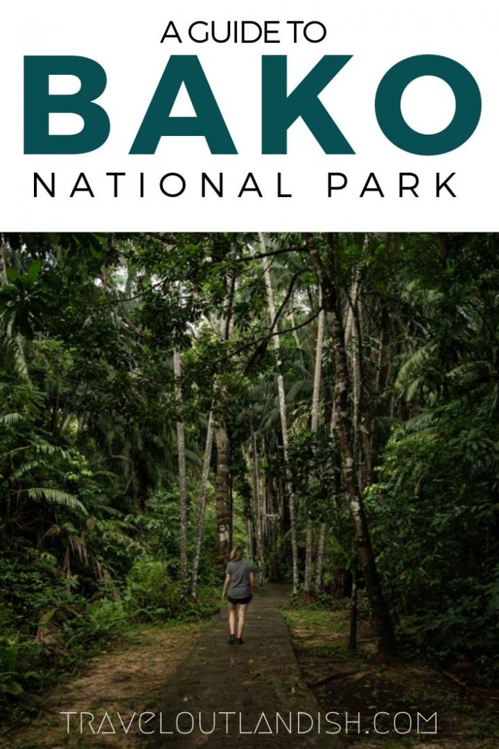 Exploring Bako National Park in Sarawak is undertaking a real adventure. Here's where to find Proboscis monkeys, how to get to Bako, and where to stay.