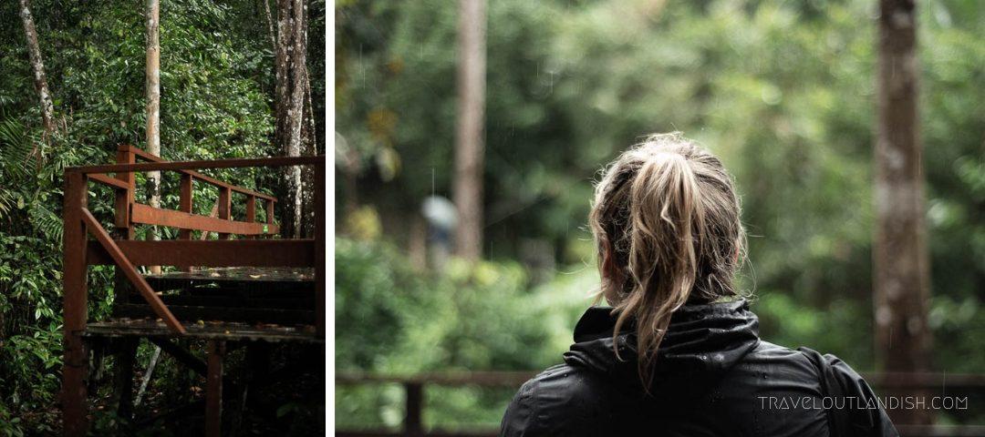 Semenggoh WIldlife Centre - Watching for Orangutans