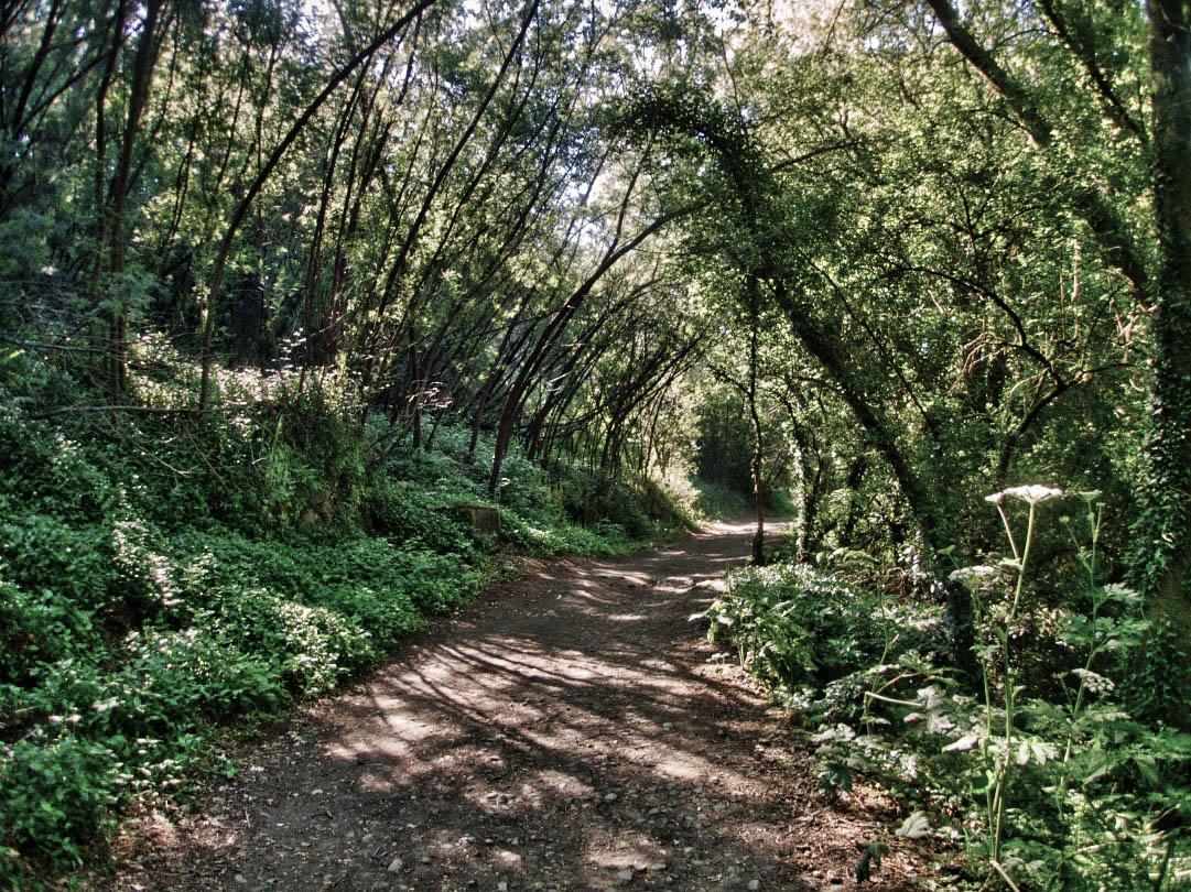 The Camino de Santiago - The Camino Portugues