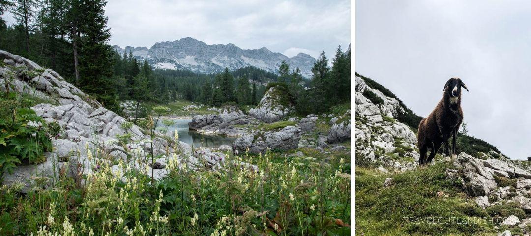The Slovenian Mountain Trail in Slovenia