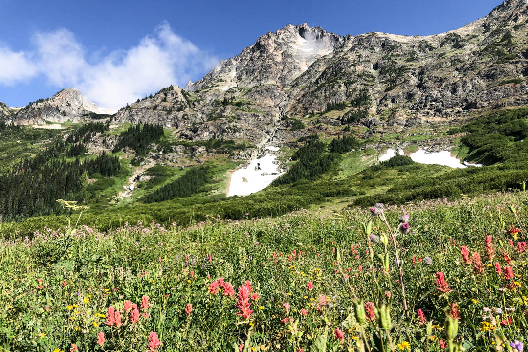 Hikes in North Cascades - Wildflowers