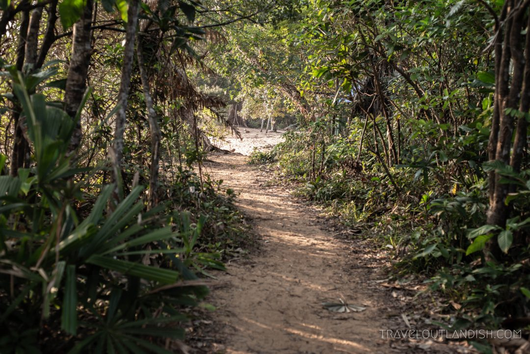 Jungle Hike on Koh Rong Samloem